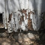 5 Reasons You Will Want to Take out a Termite Bond