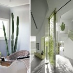 Ideas for decorating with cactus