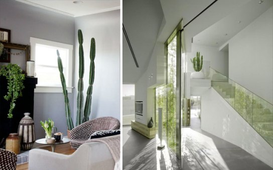 decorating with cactus