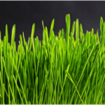 Pros and Cons of Getting Artificial Turf